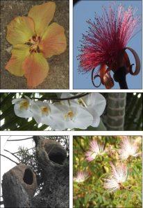 flowers-rio