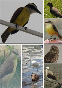 birds-rio